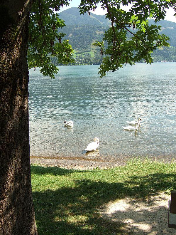 Radweg am Zeller See